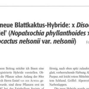 Paper digital: x Disochia Emiel, a new hybrid